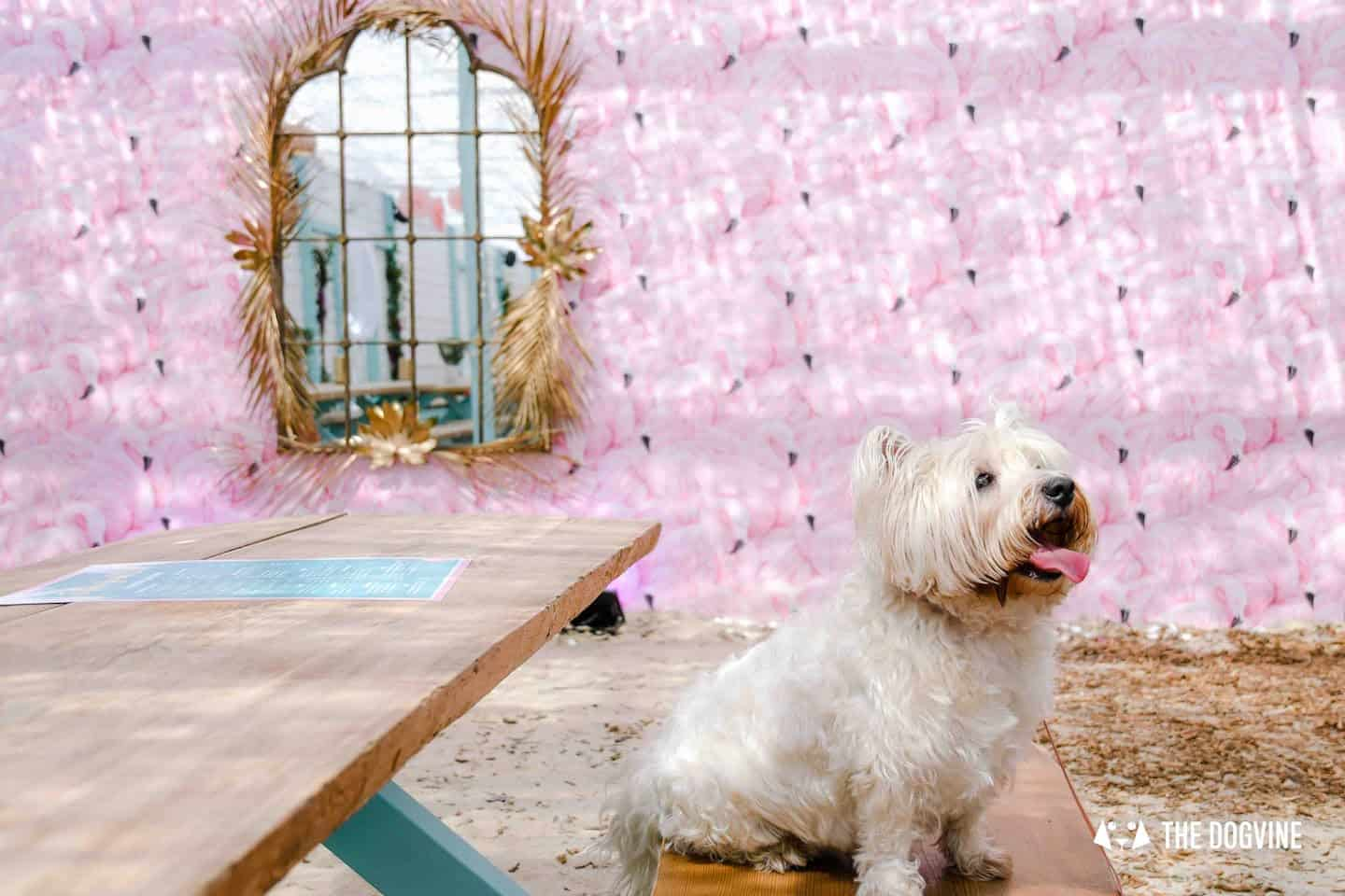 Dog-Friendly Neverland Beach Club - All You Need To Know 4