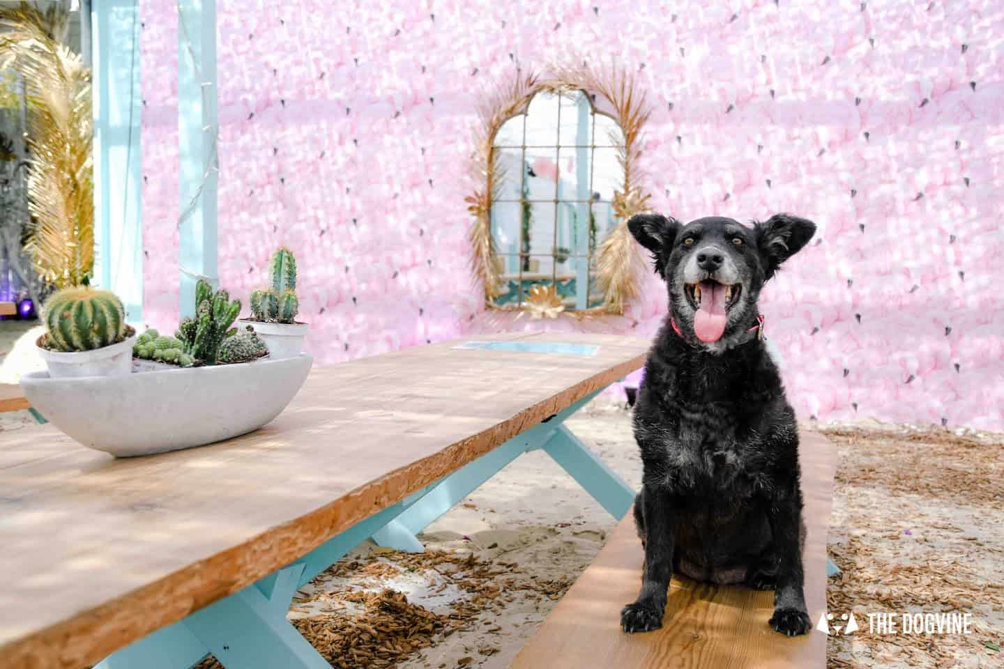 Dog-Friendly Neverland Beach Club - All You Need To Know 5