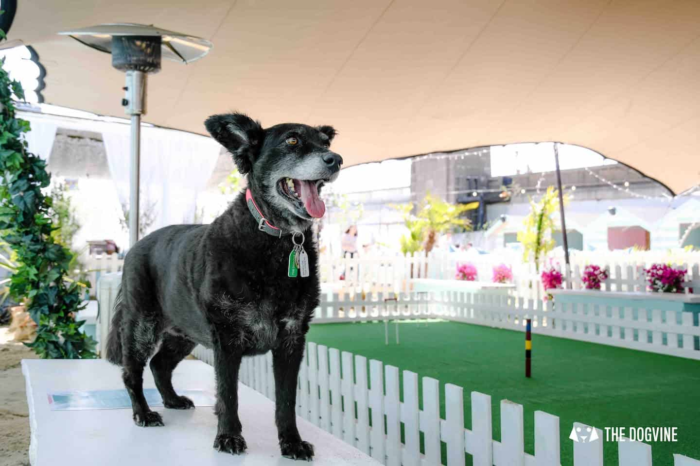 Dog-Friendly Neverland Beach Club - All You Need To Know 7