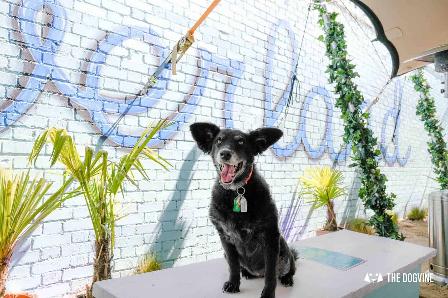 Dog-Friendly Neverland Beach Club | All You Need To Know