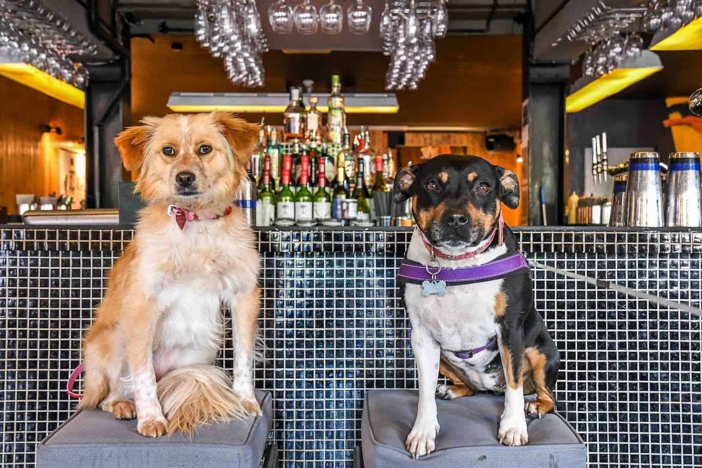 Your London Dog Events Round-up | 26-28 May