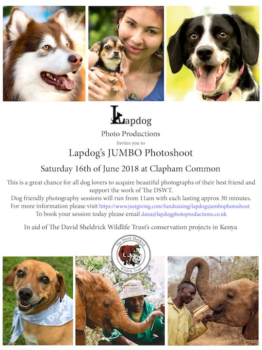 London Dog Events - Lapdog's Jumbo Photoshoot 4