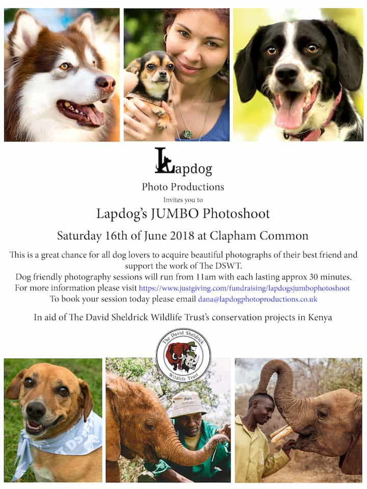 London Dog Events - Lapdog's Jumbo Photoshoot 6