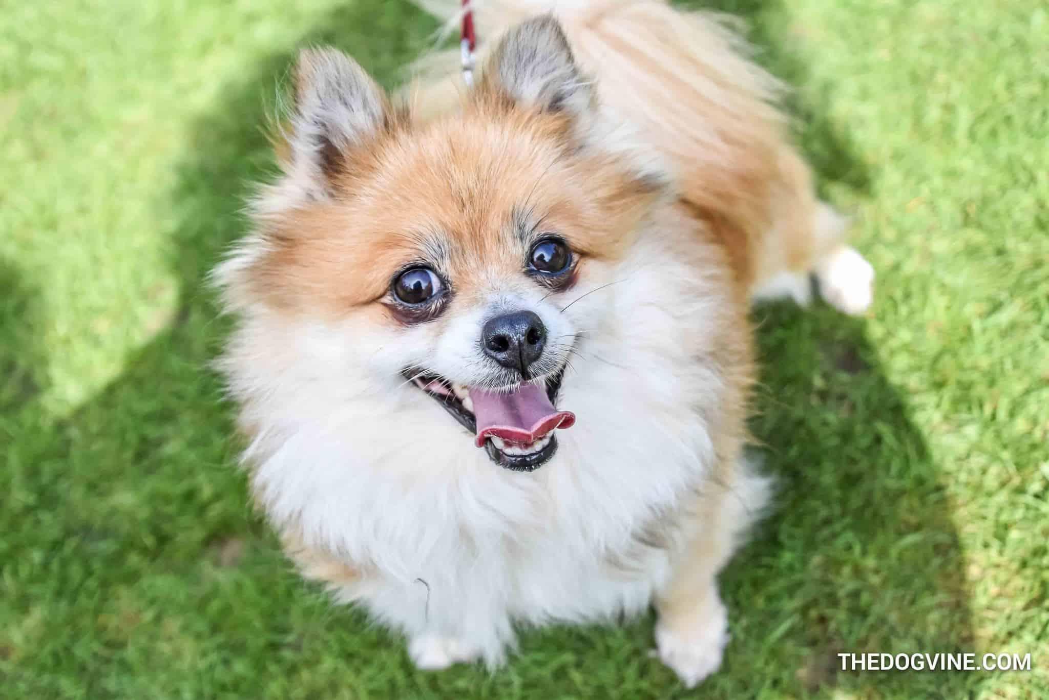 London Dog Shows - Battersea Park Dog Show 2018