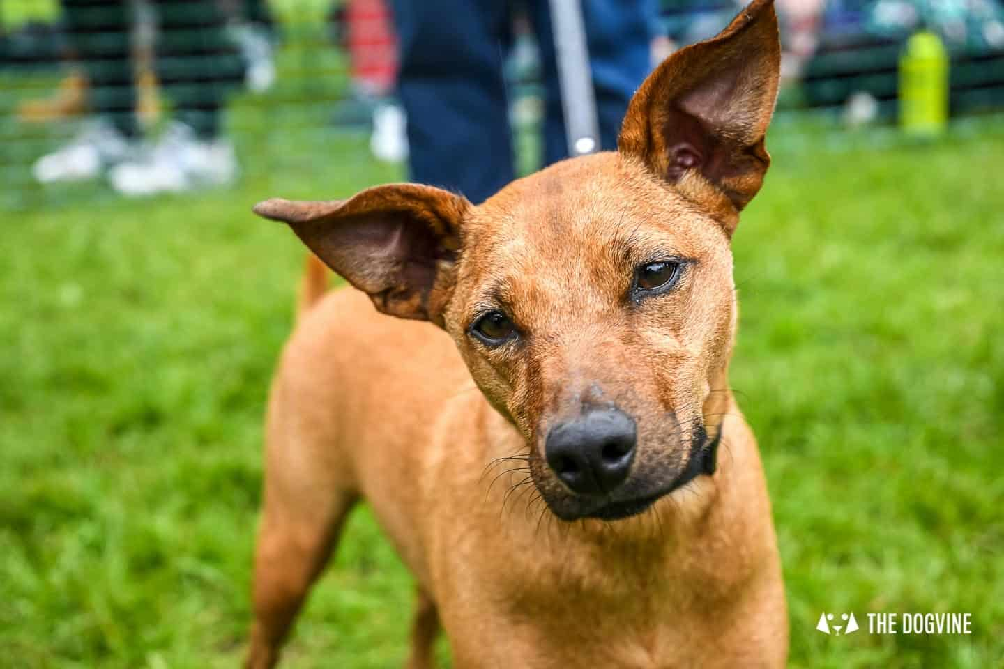 London Dogs At The Great Hampstead Bark Off 2018 100