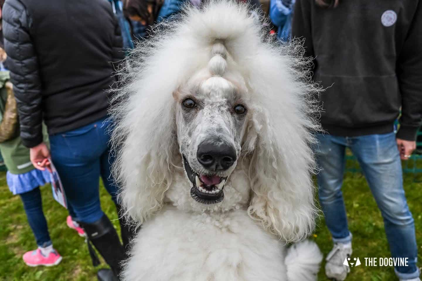London Dogs At The Great Hampstead Bark Off 2018 27