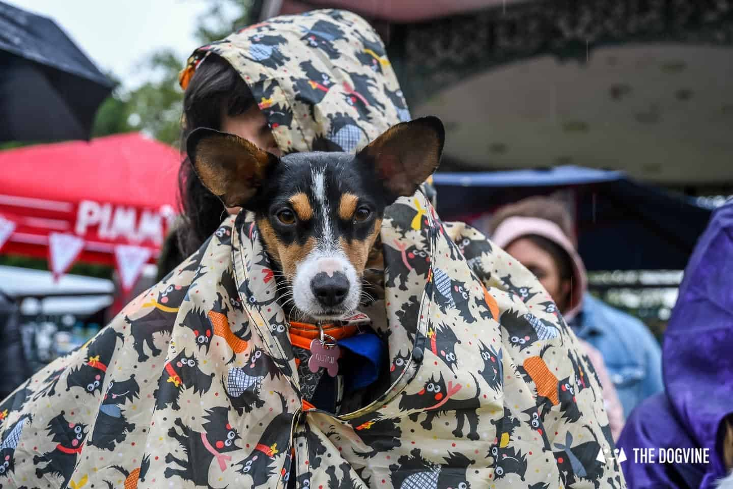 London Dogs At The Great Hampstead Bark Off 2018 89
