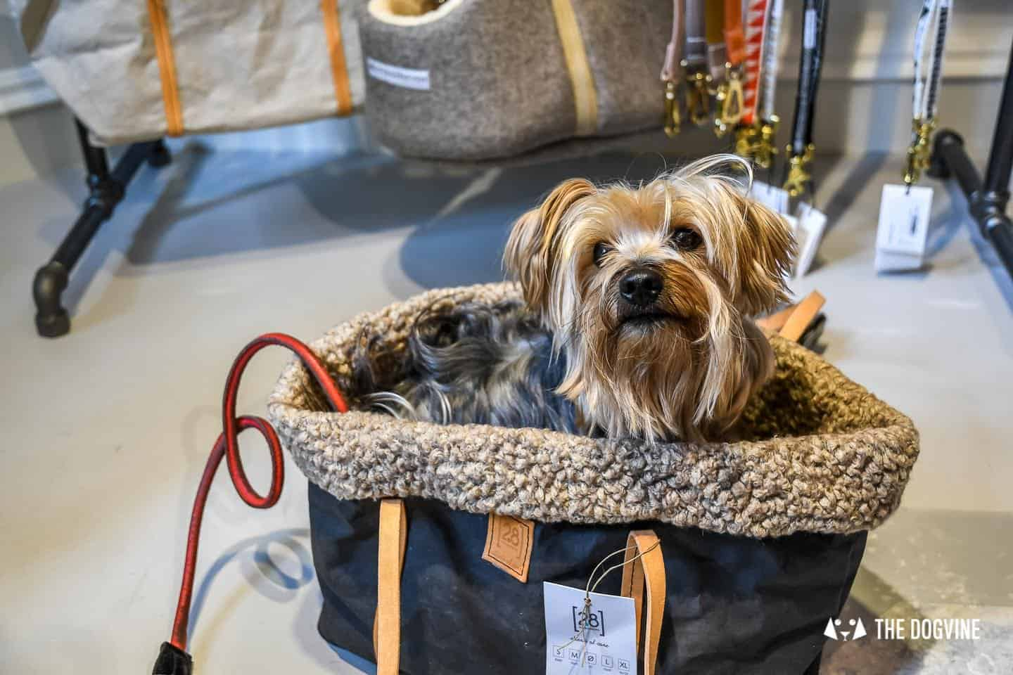 New Pet Lifestyle Brand Love My Human + Chelsea In Bloom 23