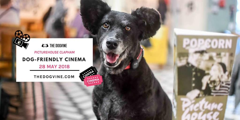 TW London Dog Events - Dog-Friendly Cinema At Clapham Picturehouse