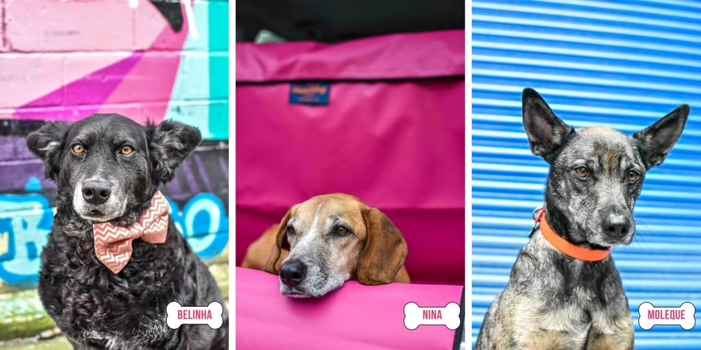 The Dogvine - Belinha, Moleque, Nina - About Us - May 2018