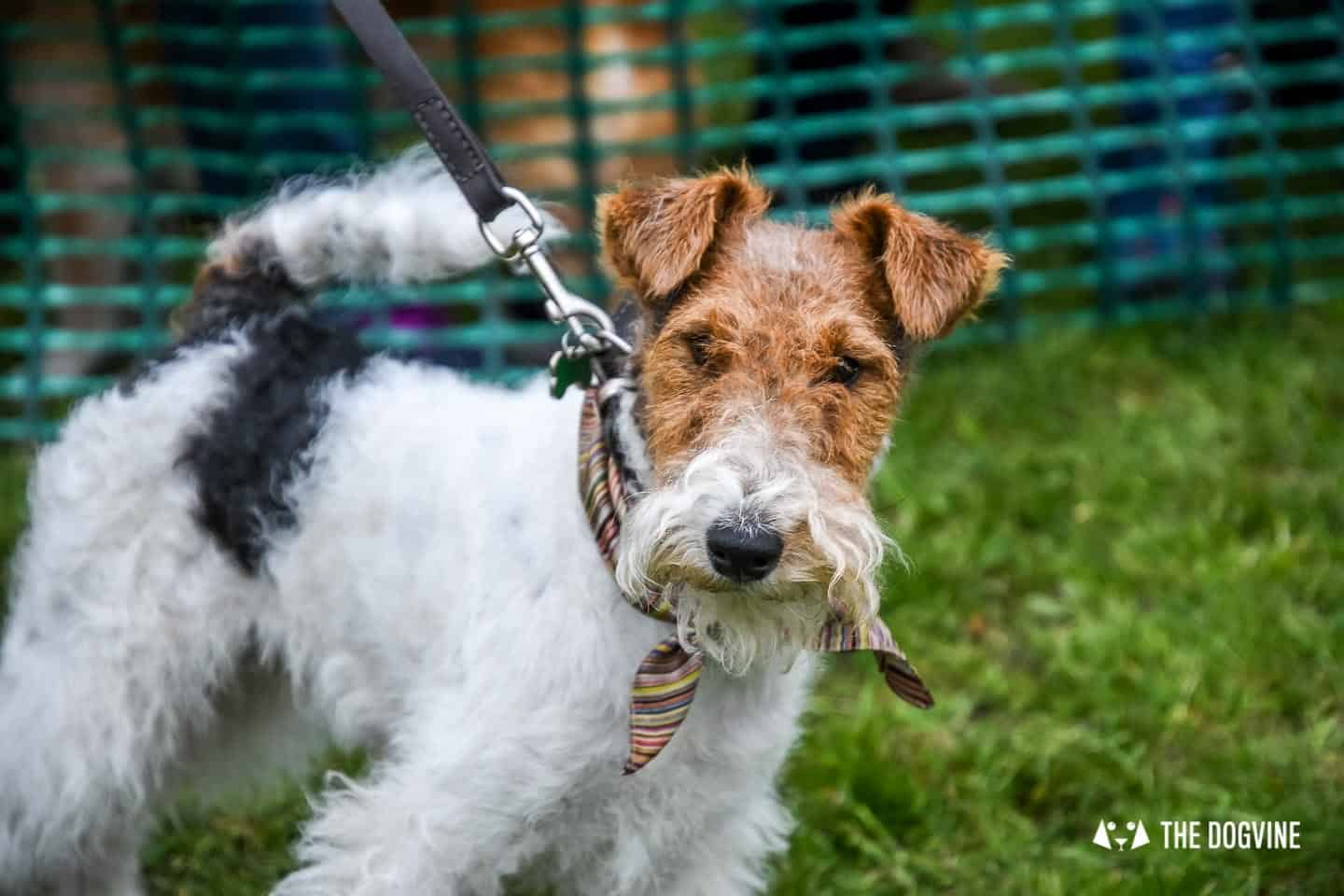 Things To Do With Your Dog In And Around London | 19-22 May - Hattie