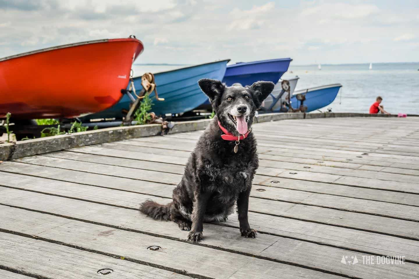 Dog Friendly Whitstable