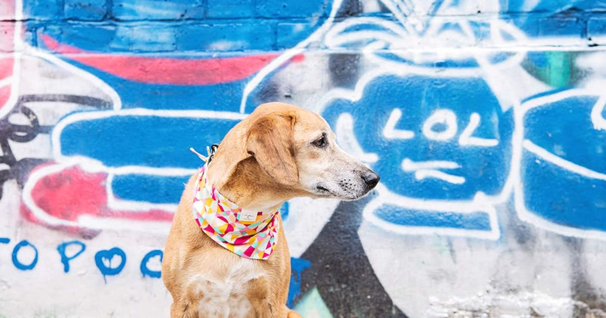 Pawsome London Dog Events For The Weekend