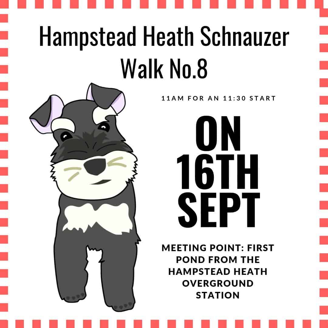Hampstead Heath Schnauzer Walk No.8