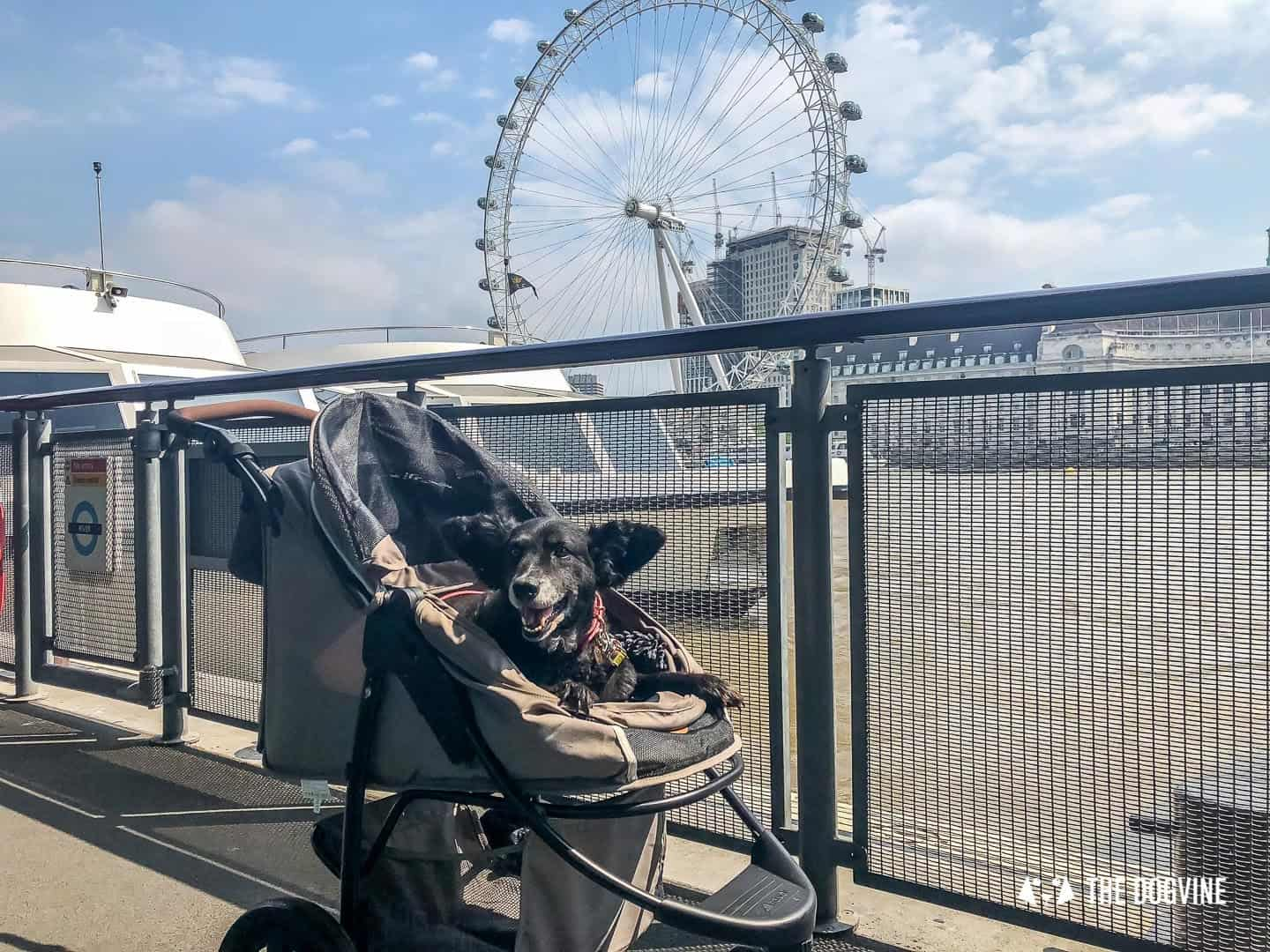 How To Get Around London With A Dog On The River Bus 15