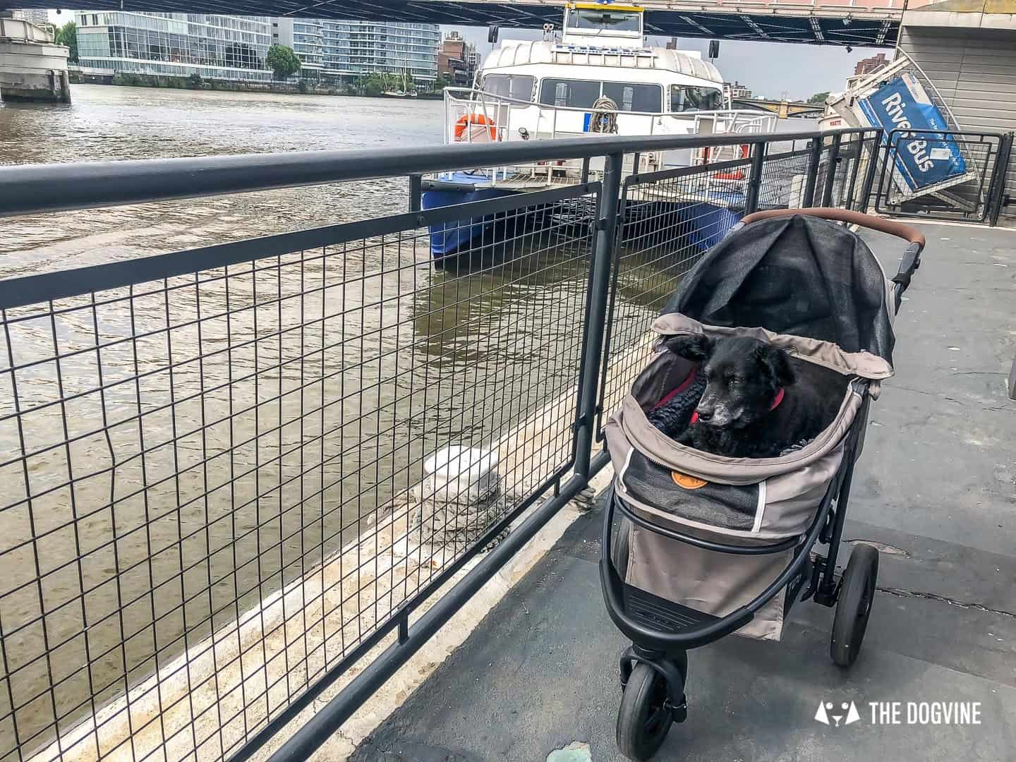How To Get Around London With A Dog On The River Bus 7
