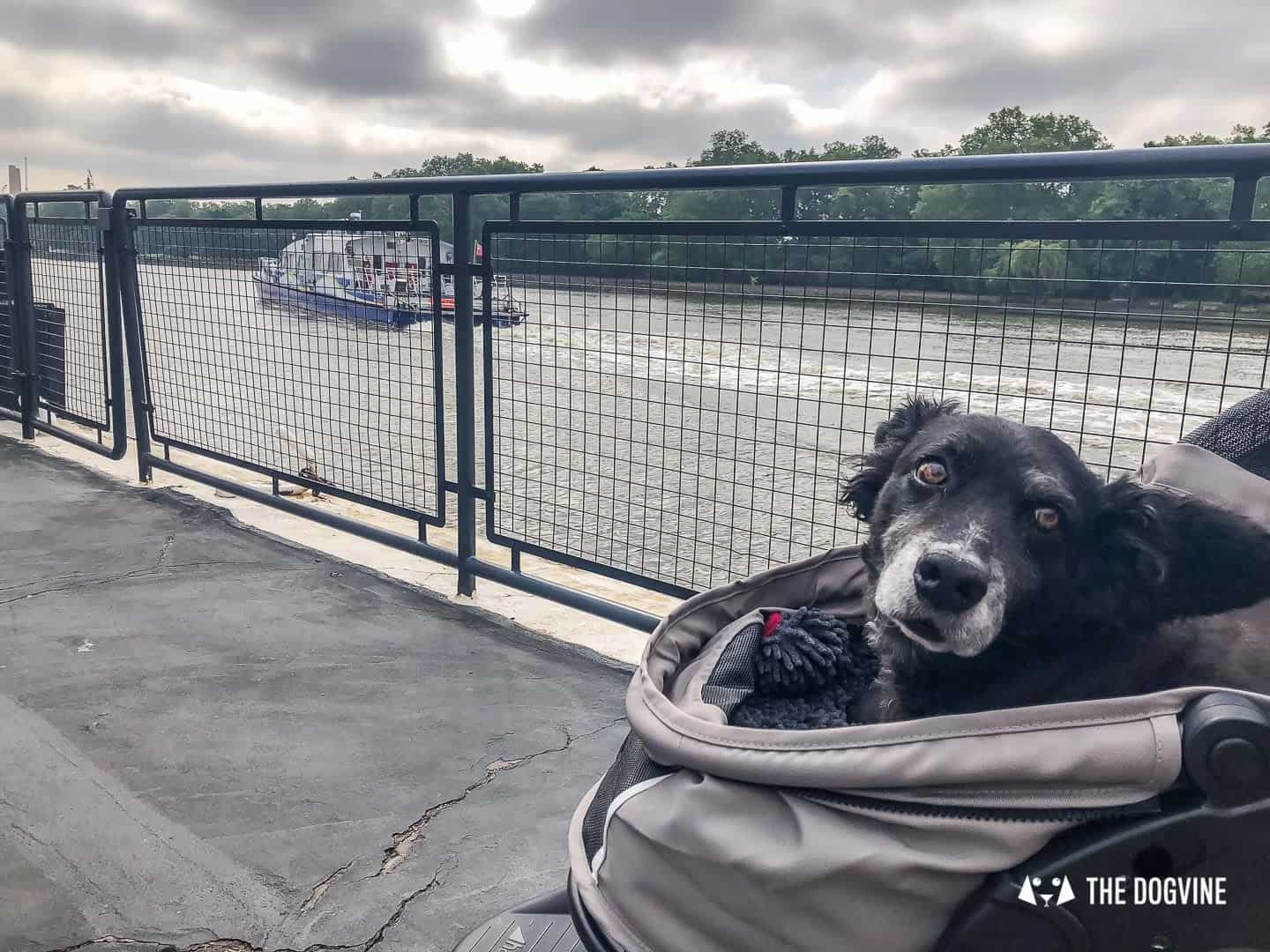 How To Get Around London With A Dog On The River Bus 8