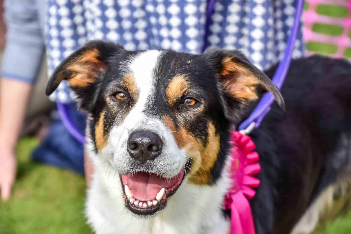 London Dog Shows And Events This Weekend | 09-10 June