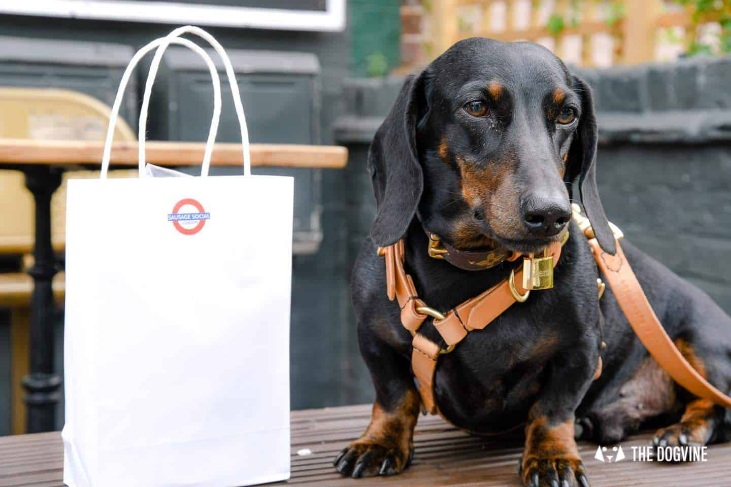 London's Best Dressed Dachshunds At Sausage Social London The Mad Hatters Tea Party 134