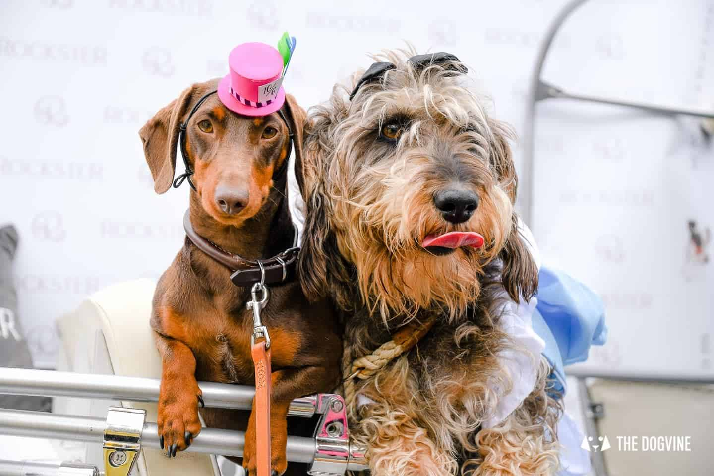London's Best Dressed Dachshunds At Sausage Social London The Mad Hatters Tea Party 138