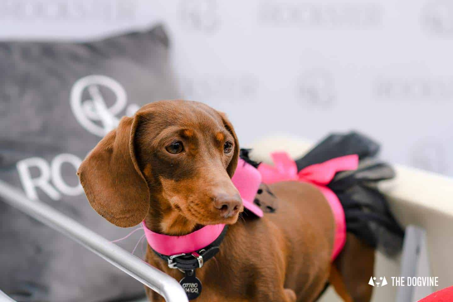 London's Best Dressed Dachshunds At Sausage Social London The Mad Hatters Tea Party 143