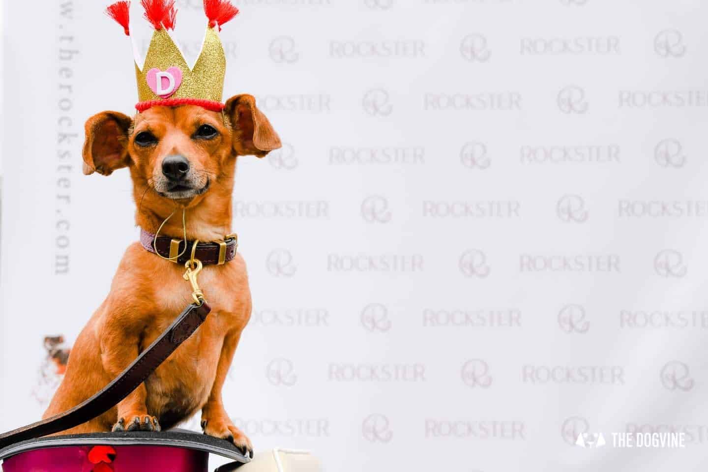 London's Best Dressed Dachshunds At Sausage Social London The Mad Hatters Tea Party 92
