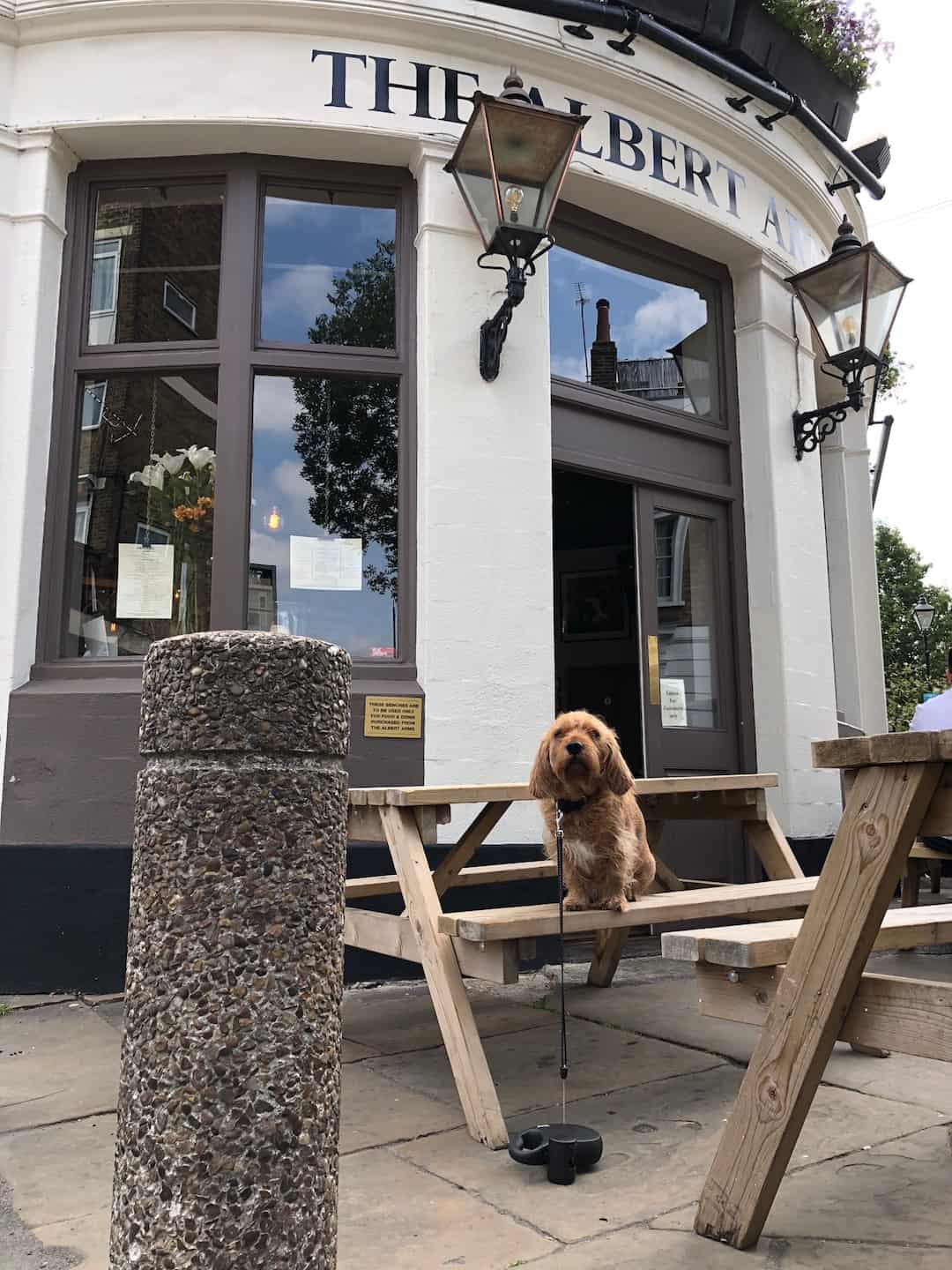 My Dog Friendly London By Amber - Dog Friendly Elephant & Castle - Albert Arms 3
