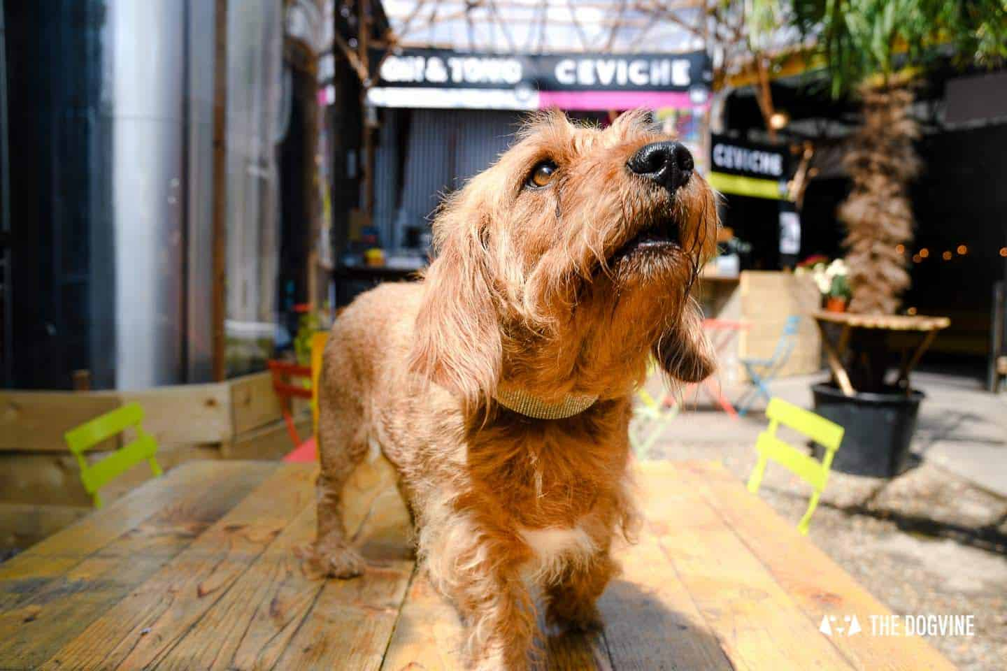 My Dog Friendly London By Amber - Dog Friendly Elephant & Castle - Mercato Metropolitano 1