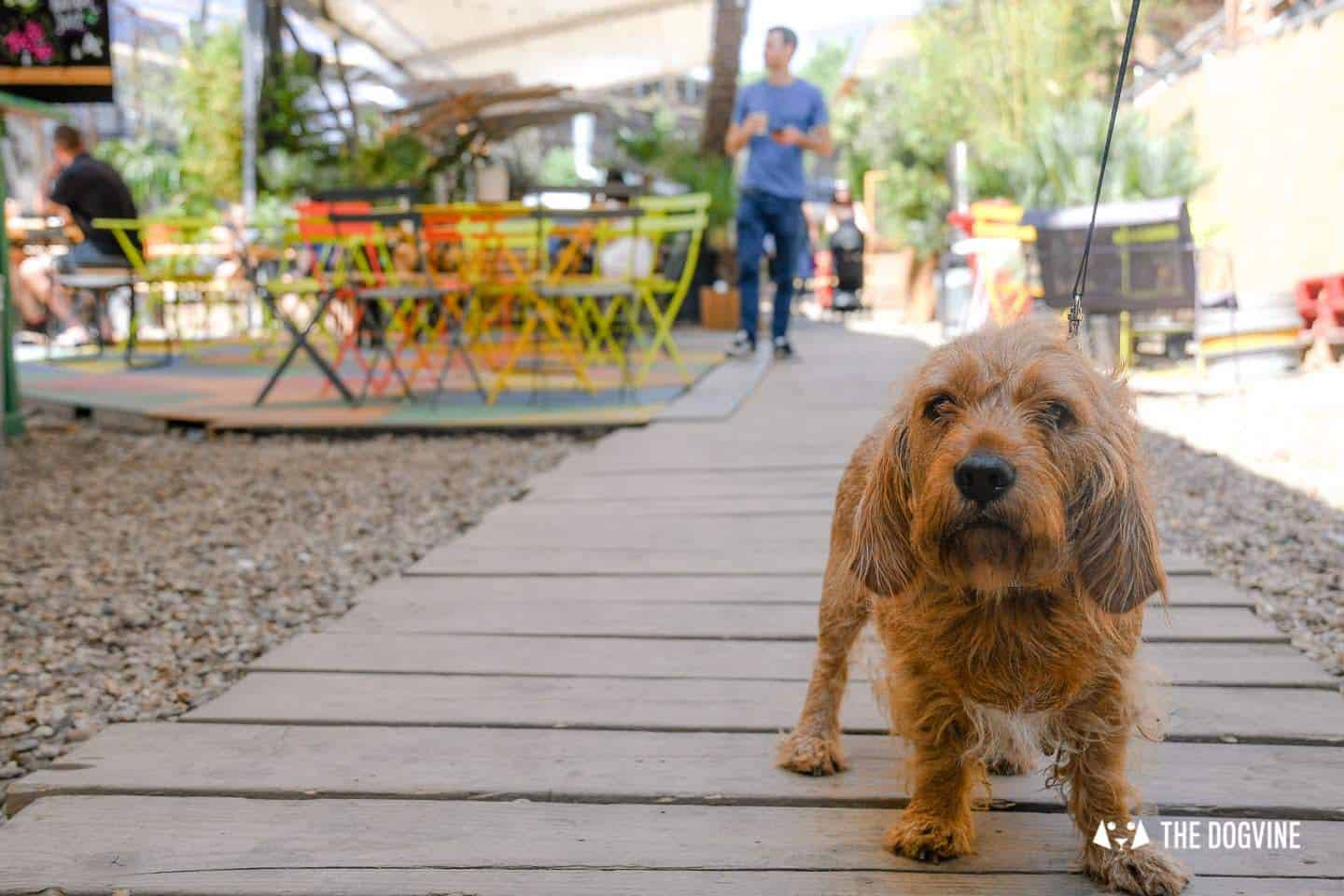 My Dog Friendly London By Amber - Dog Friendly Elephant & Castle - Mercato Metropolitano 14