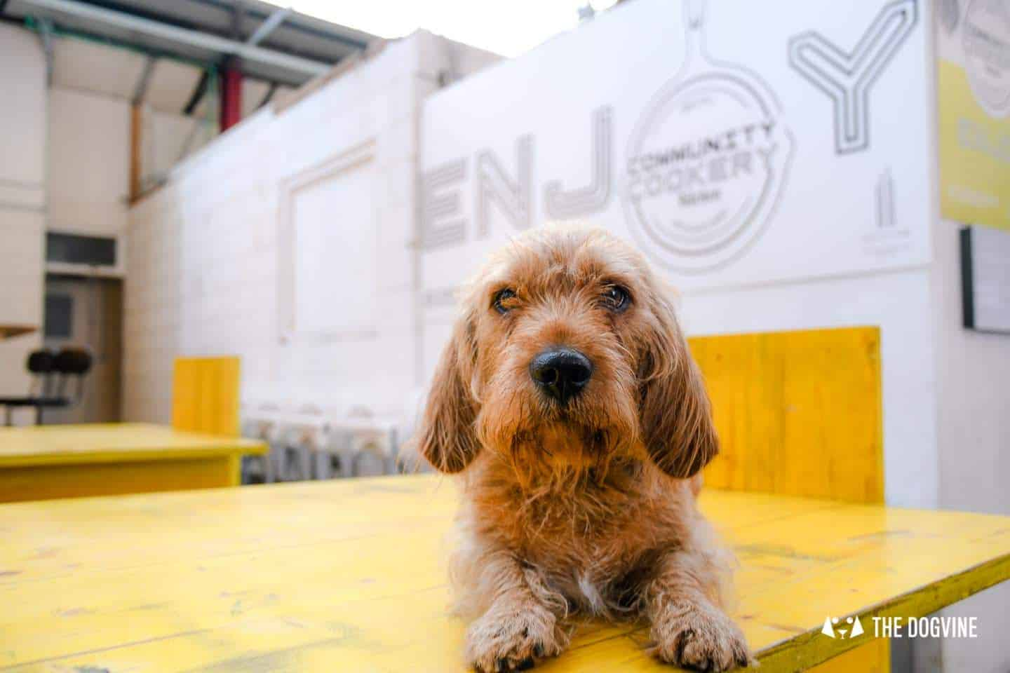 My Dog Friendly London By Amber - Dog Friendly Elephant & Castle - Mercato Metropolitano 18