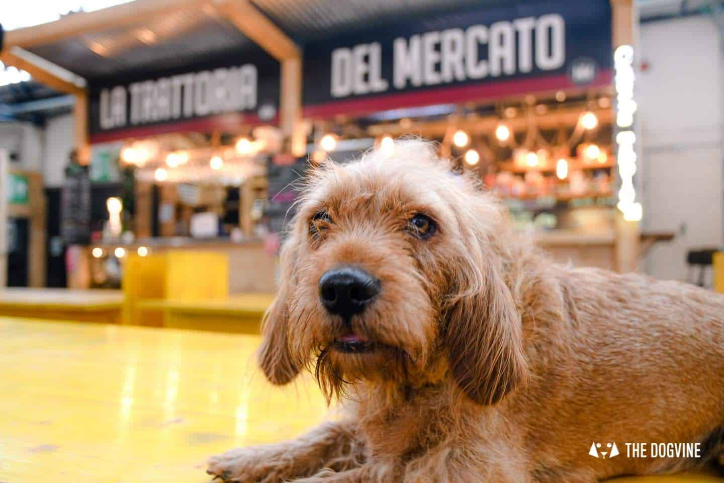 My Dog Friendly London By Amber - Dog Friendly Elephant & Castle - Mercato Metropolitano 20