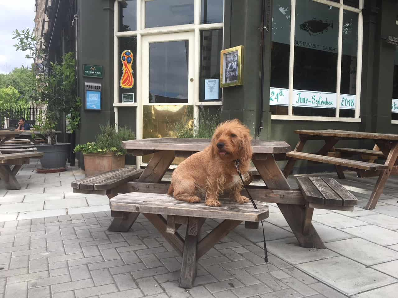 My Dog Friendly London By Amber - Dog Friendly Elephant & Castle - The Stag 1
