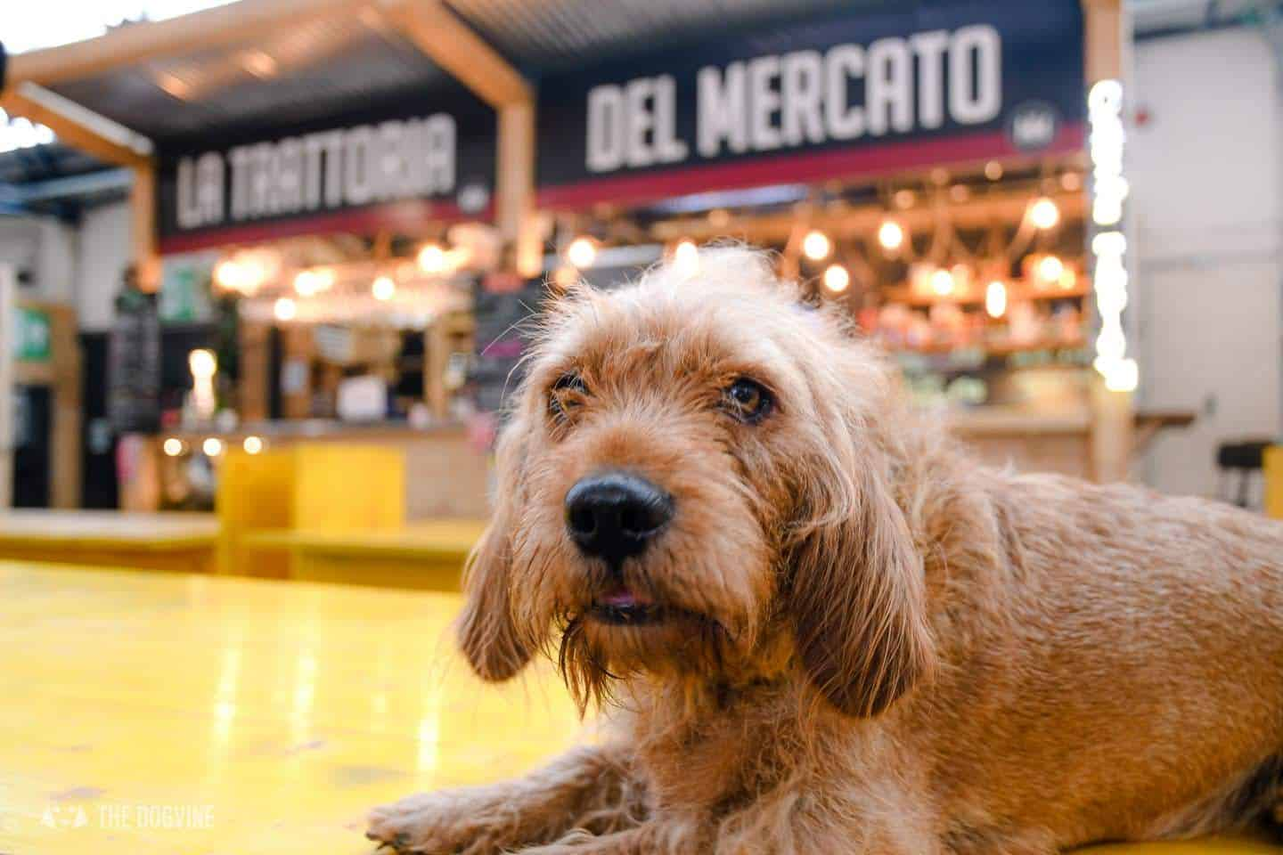 Guide To The Best Dog-friendly Street Food Markets and Halls