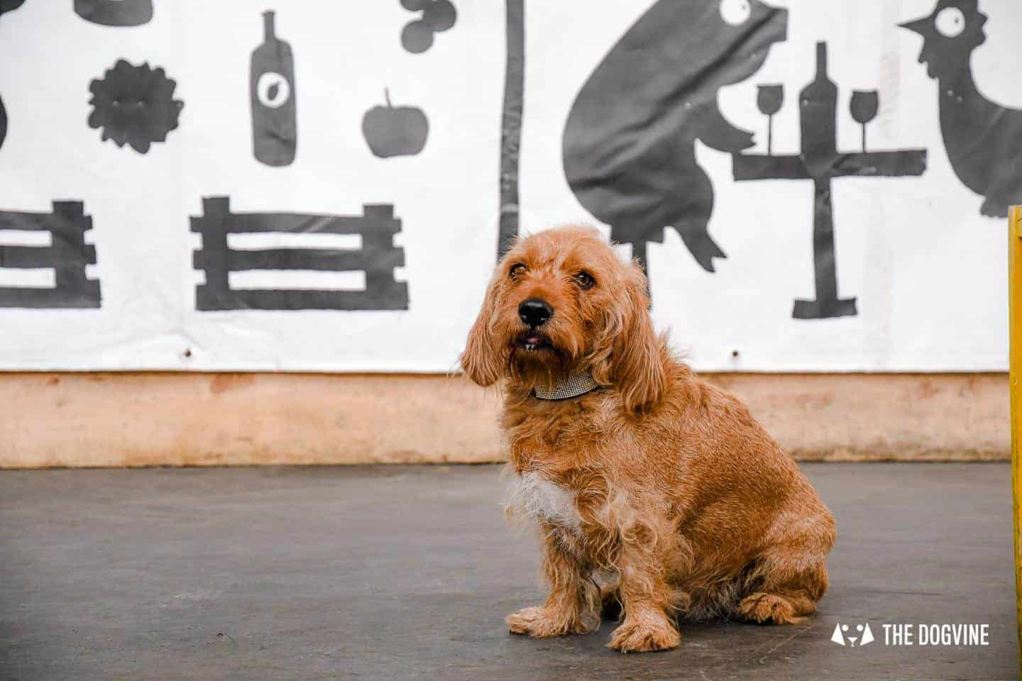 My Dog Friendly London By Amber The Basset Fauve De Bretagne - Mercato Metropolitano 3