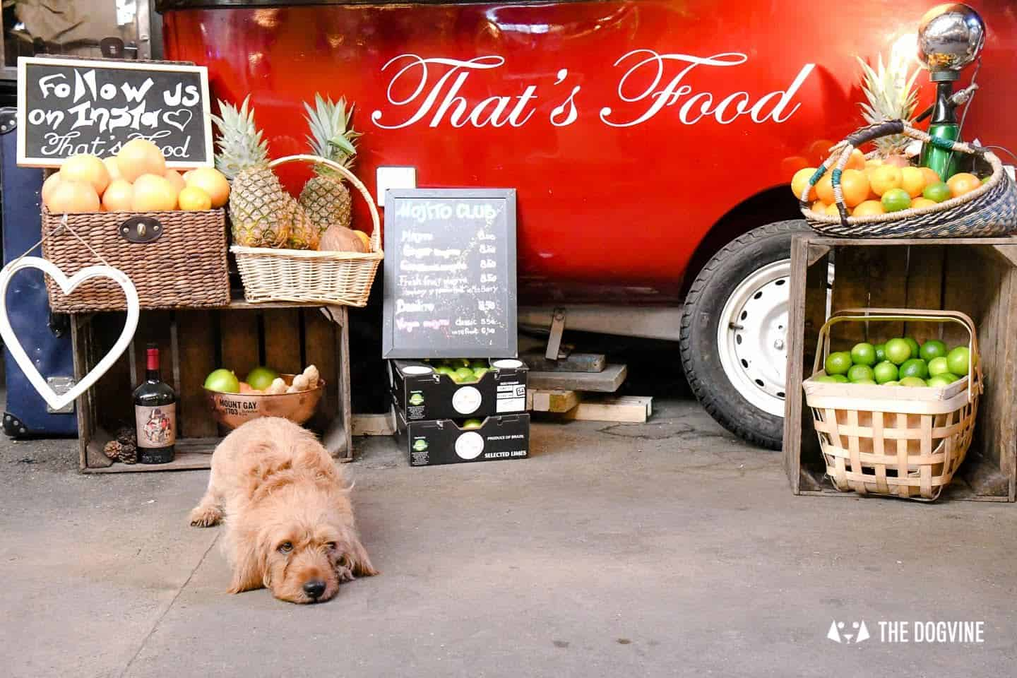 My Dog Friendly London By Amber The Basset Fauve De Bretagne - Mercato Metropolitano 9