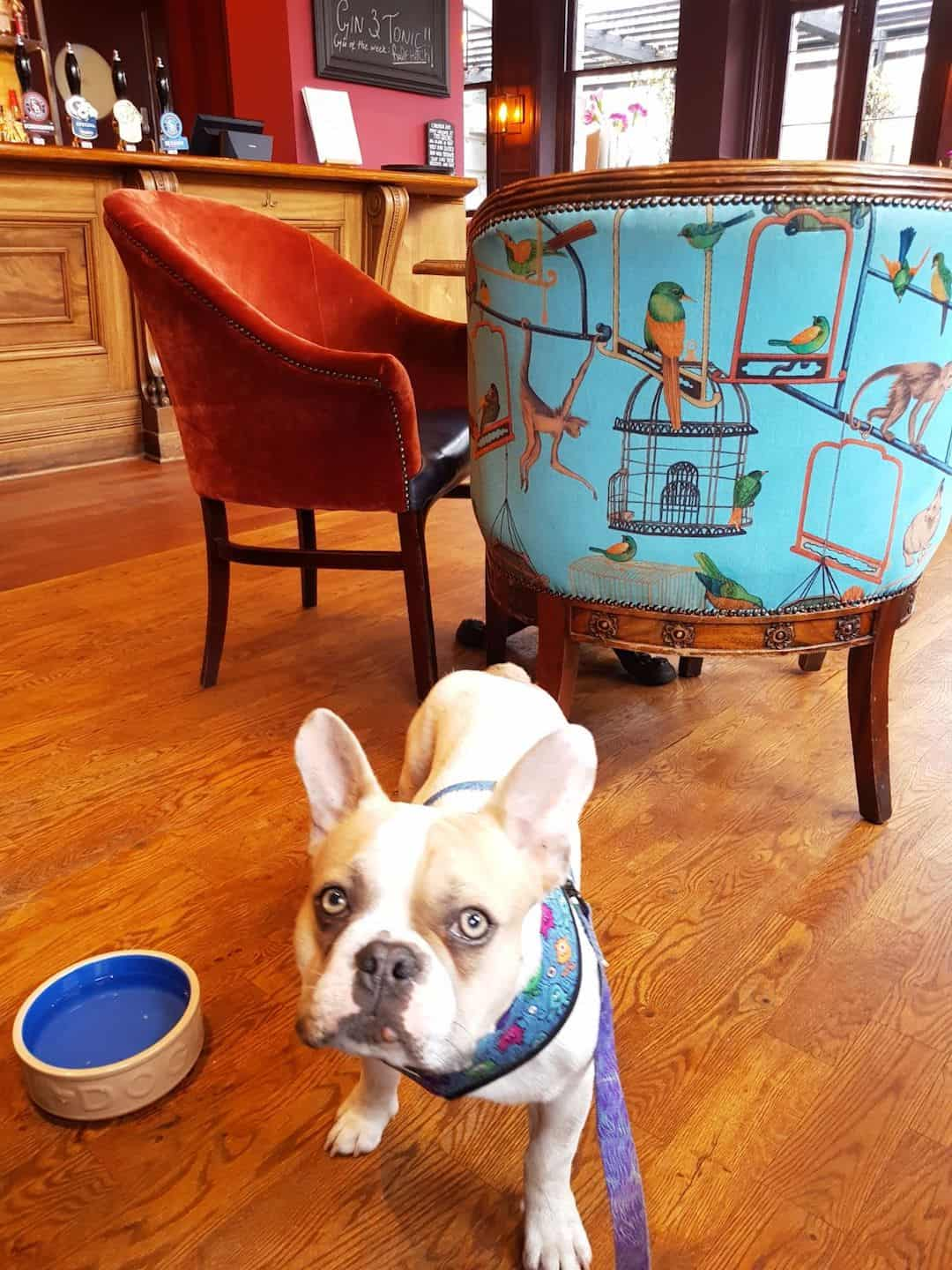 My Dog Friendly London By Herbie and Dave The Frenchies 11
