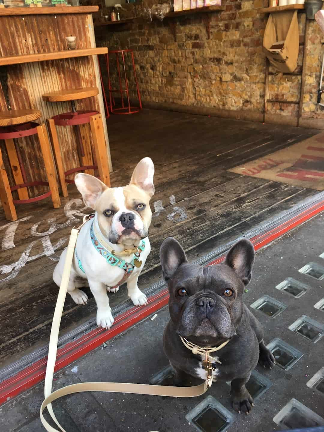My Dog Friendly London By Herbie and Dave The Frenchies 13