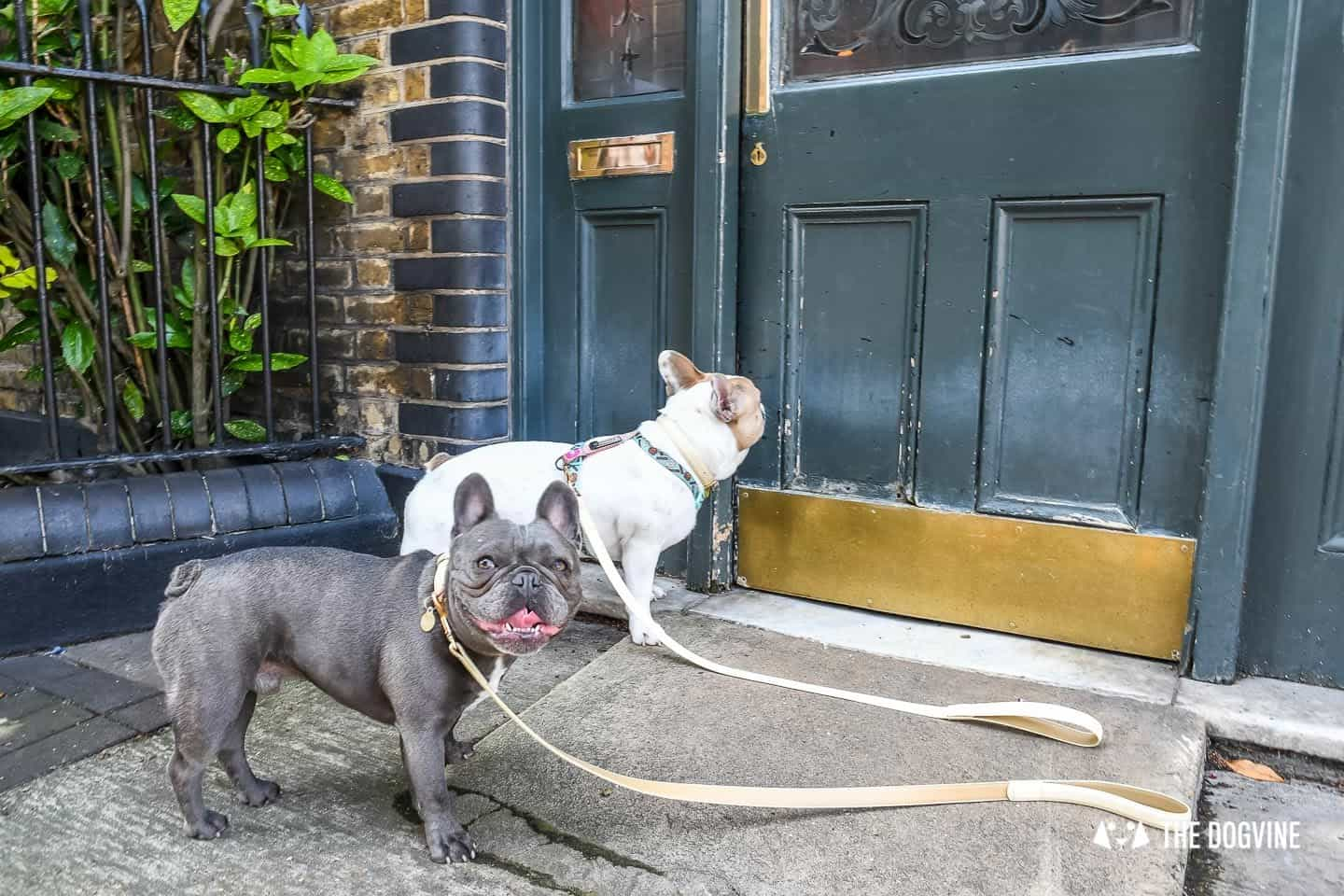 My Dog Friendly London By Herbie and Dave The Frenchies 2