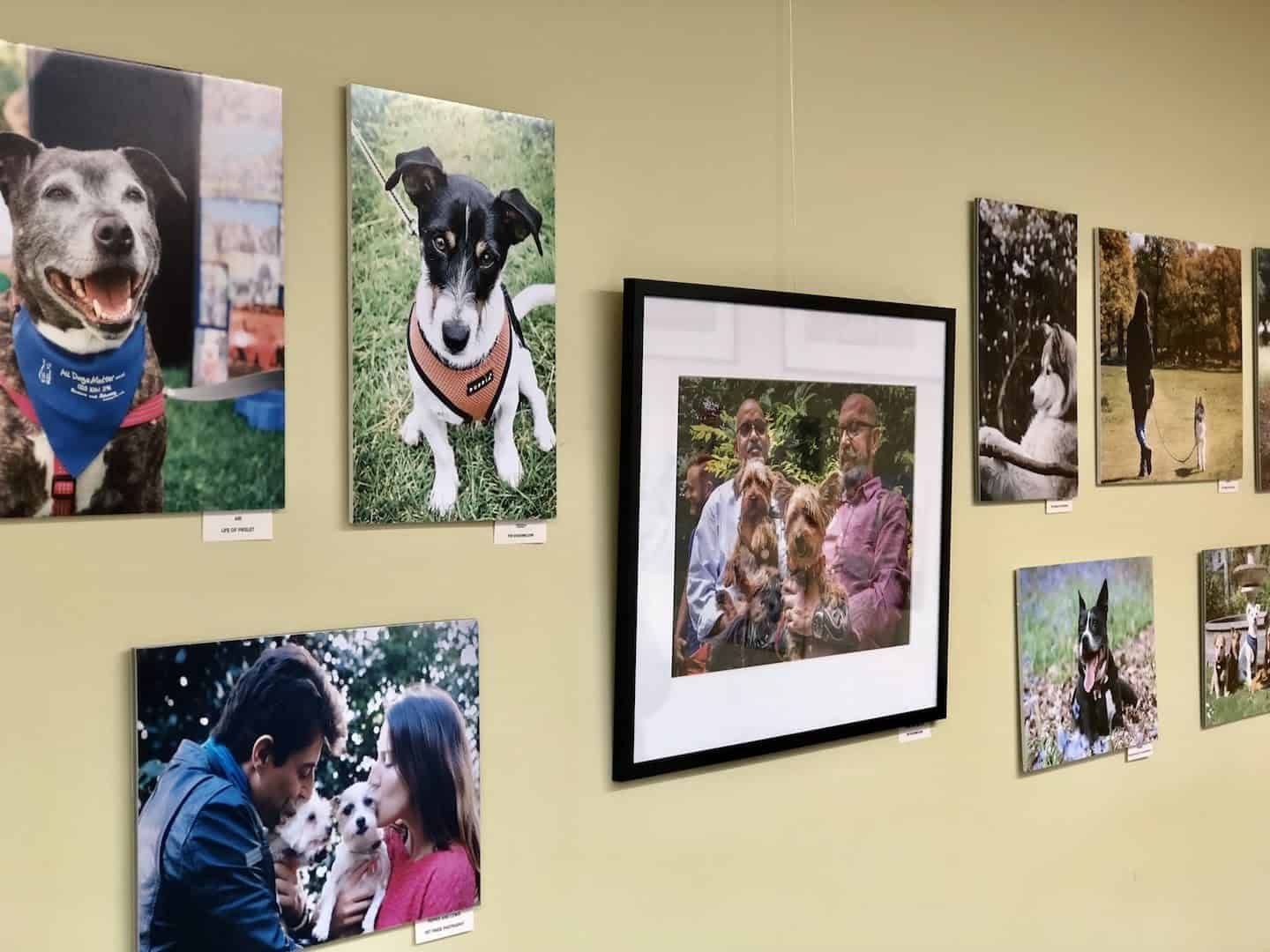 Year of The (Rescue) Dog Photo Exhibition 3
