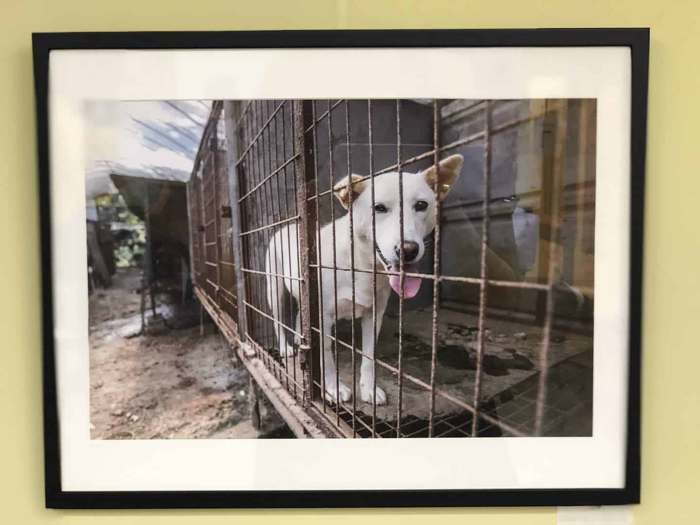 Year of The (Rescue) Dog Photo Exhibition 7