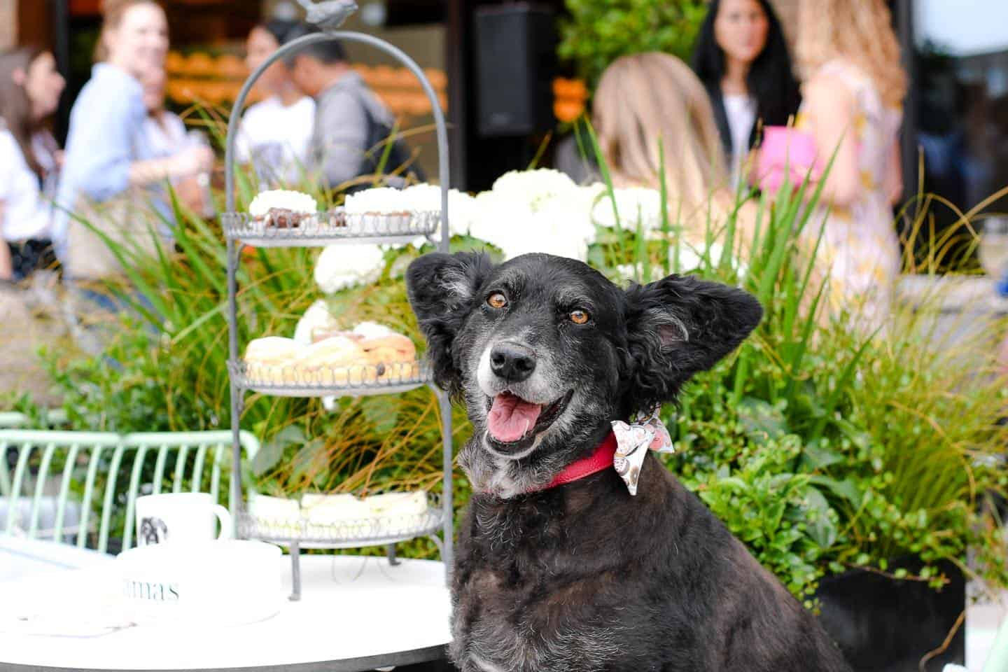 A Pup of Tea Doggie Afternoon Tea At Dog-Friendly Bluebird White City