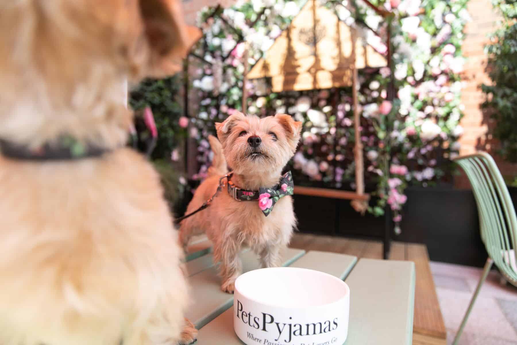 'A Pup of Tea' Doggie Afternoon Tea 1