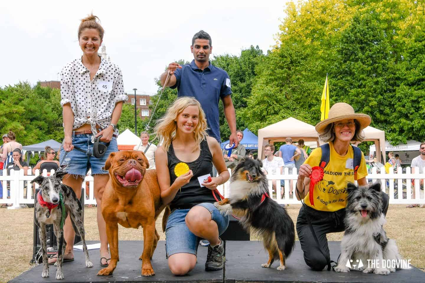 All Things Dog At The Canary Woof Dog Show 2018 17
