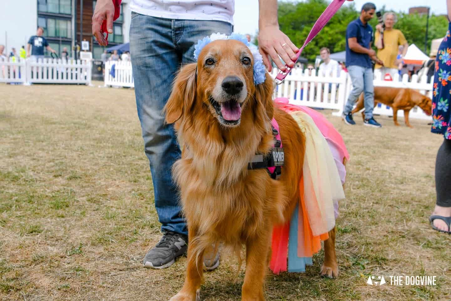 All Things Dog At The Canary Woof Dog Show 2018 21