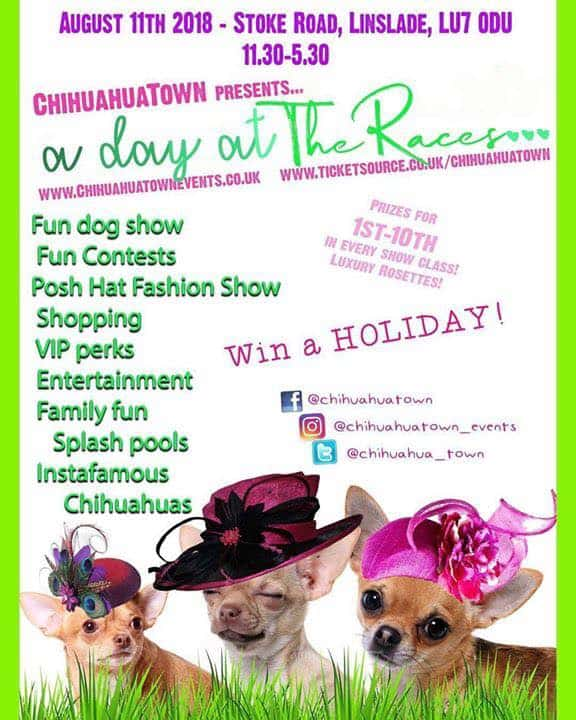 ChihuahuaTown A Day At The Races
