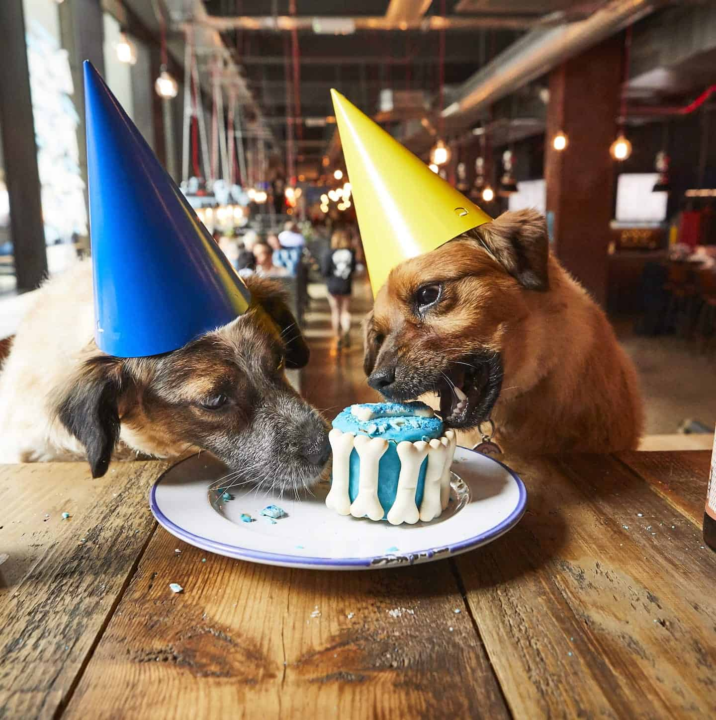 London Dog Events On This Weekend | 28-29 July - BrewDog Dog Birthday Parties