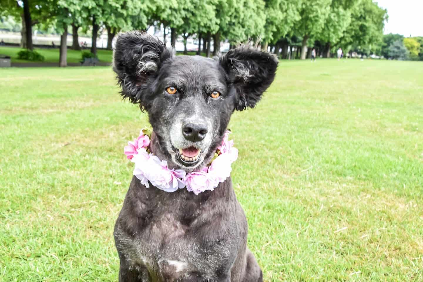 London Dog Events Round-up - Belinha