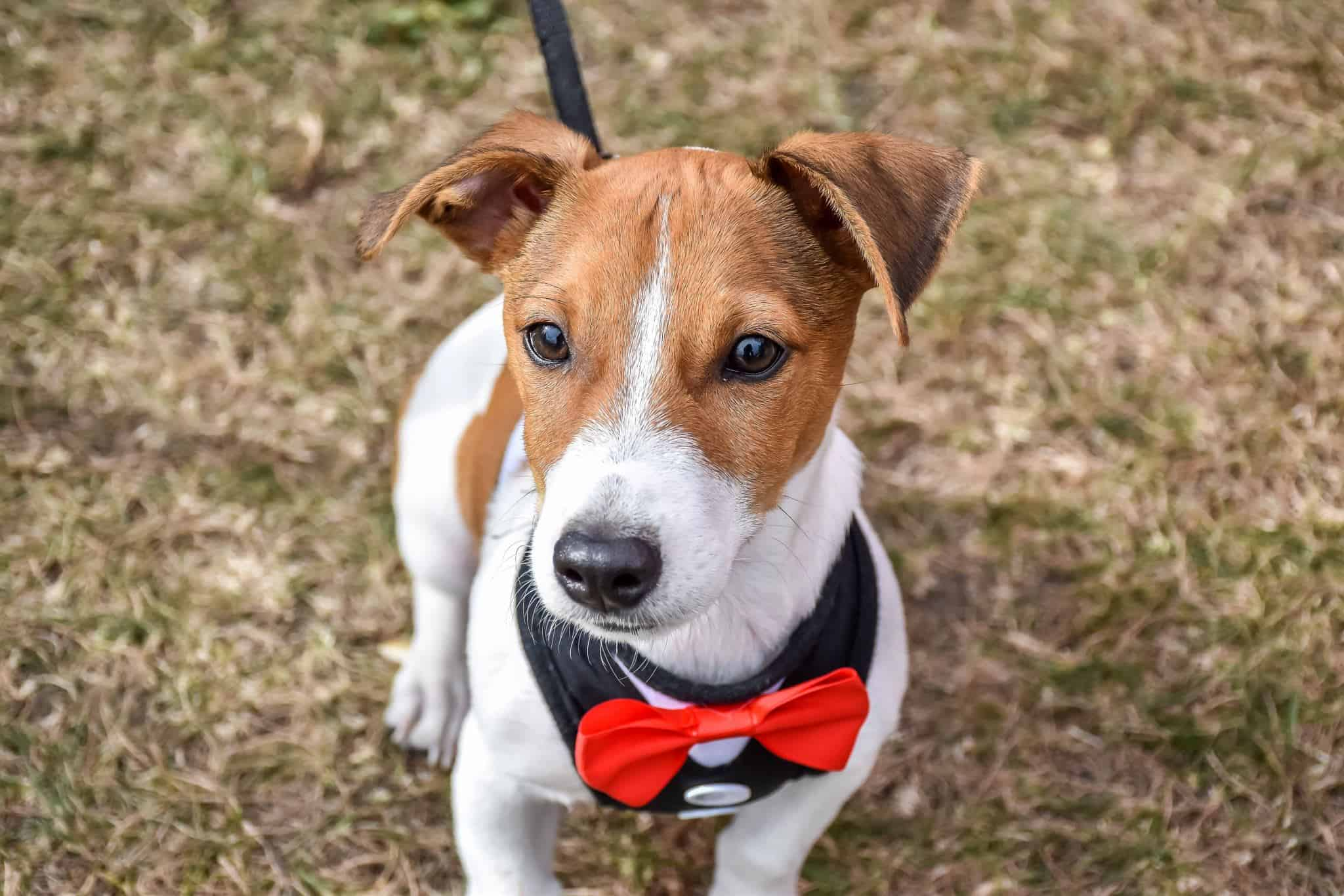 London Dog Events This Week - Dressed to Impress