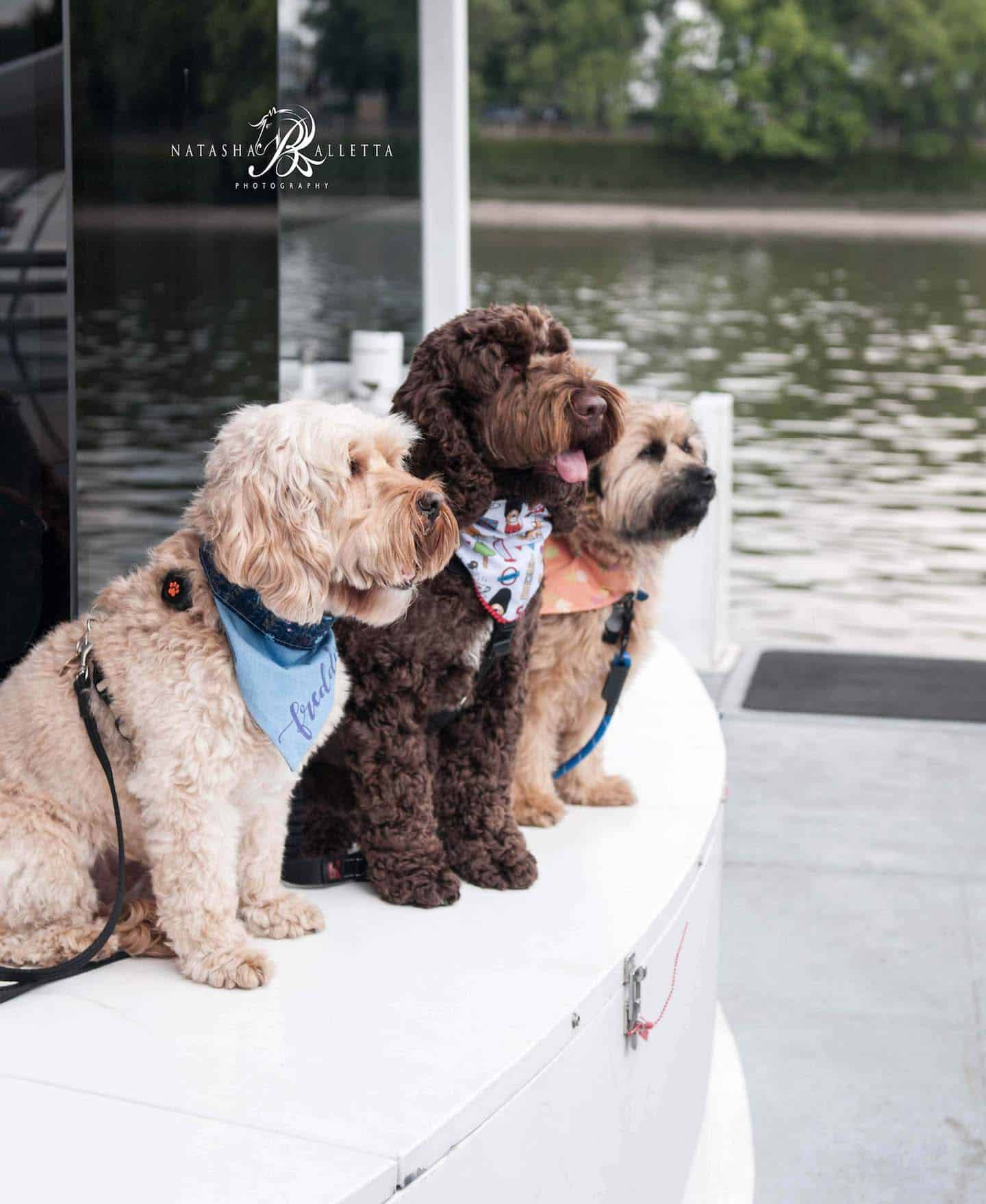 London Dogs Get Social at the London Dogs of Instagram Meetup 12