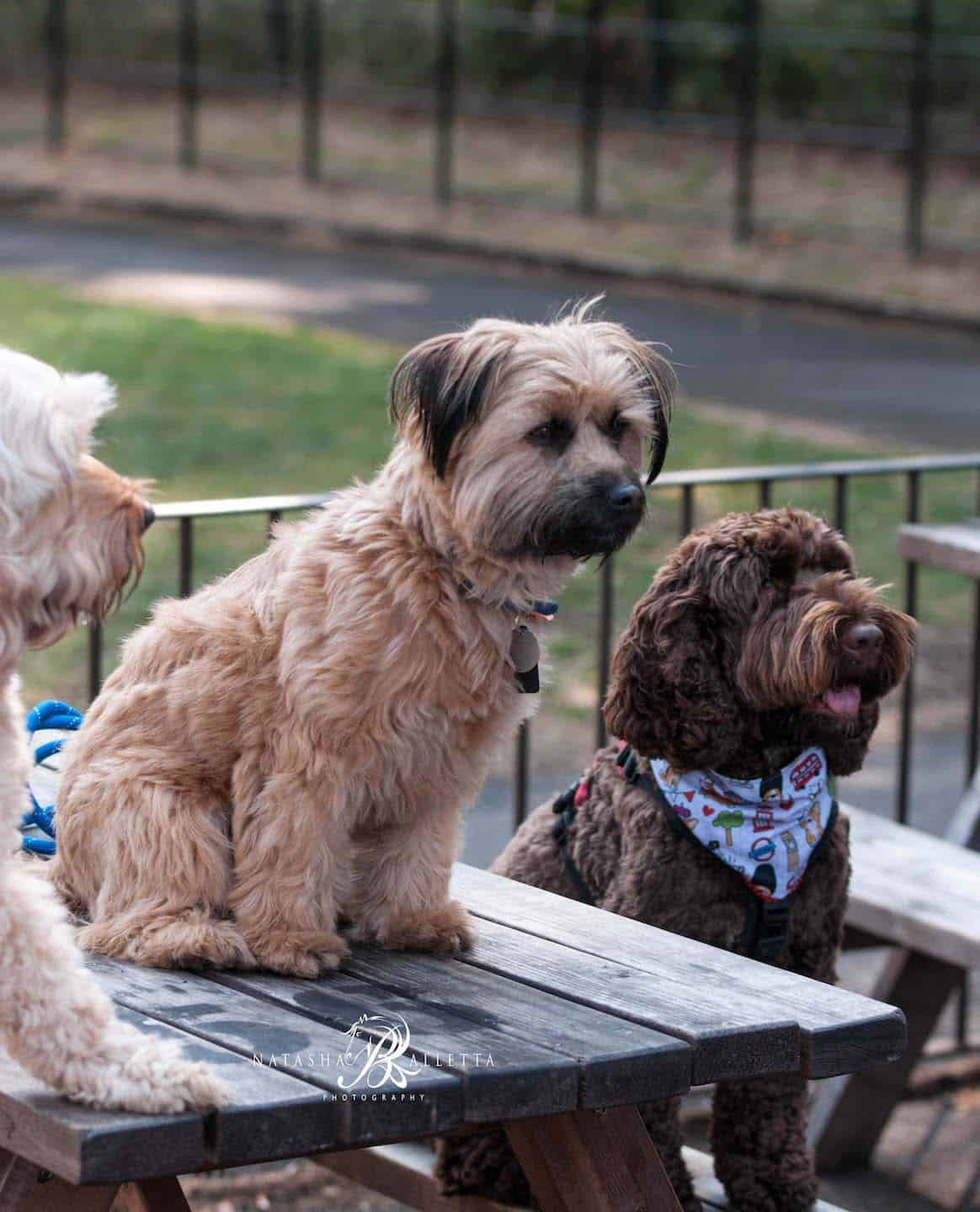 London Dogs Get Social at the London Dogs of Instagram Meetup 9
